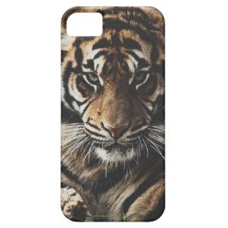 Caso del tigre iPhone 5 Case-Mate carcasa