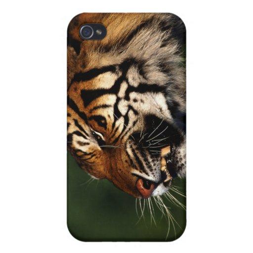 Caso del tigre iPhone 4/4S fundas