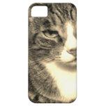 Caso del tigre iPhone 5 Case-Mate cárcasa