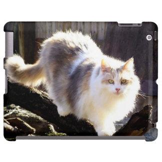 Caso diluído del iPad del gato de Coon de Maine de Funda Para iPad