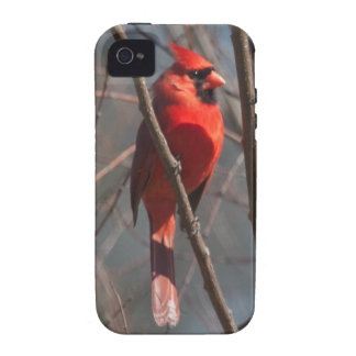 Caso duro cardinal del iPhone 4 4S Vibe iPhone 4 Funda