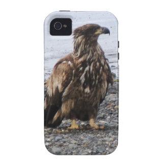 Caso duro de Kenai Alaska Eagle de oro Iphone 4 iPhone 4/4S Fundas