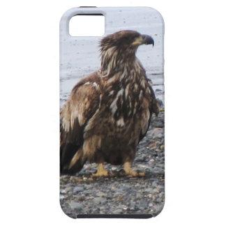 Caso duro de Kenai Alaska Eagle de oro Iphone 5 Funda Para iPhone SE/5/5s