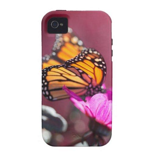 Caso duro del iPhone 4/4S de la mariposa de monarc iPhone 4/4S Funda