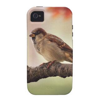 Caso duro del iPhone 4 eurasiáticos del gorrión de iPhone 4/4S Fundas