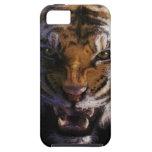 Caso enojado del iPhone 5 de la fauna del gato gra iPhone 5 Case-Mate Cárcasa