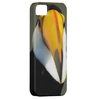 Caso exótico del iPhone 5 del paraíso del pájaro d iPhone 5 Carcasa