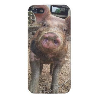 Caso fangoso del iphone del cochinillo iPhone 5 funda