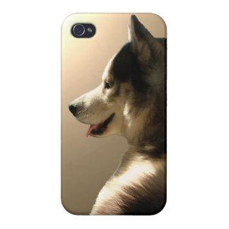 Caso fornido del Malamute del husky siberiano del iPhone 4/4S Carcasas