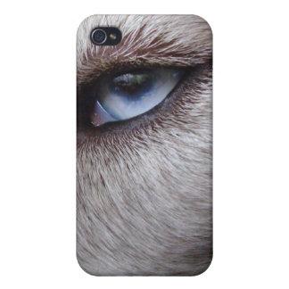 Caso fornido del Malamute del husky siberiano del iPhone 4/4S Fundas