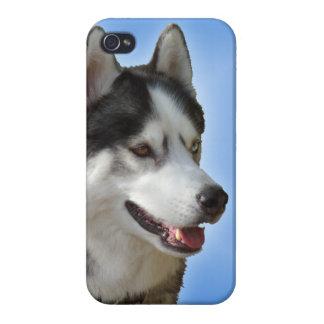 Caso fornido del Malamute del husky siberiano del iPhone 4 Carcasas