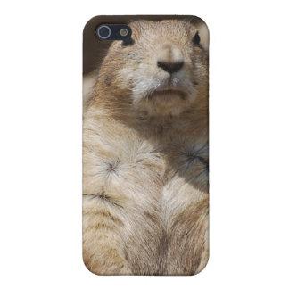 Caso fresco del iPhone del perro de las praderas iPhone 5 Coberturas