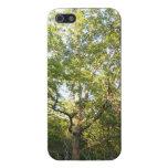 Caso frondoso del iPhone 5/5S del árbol