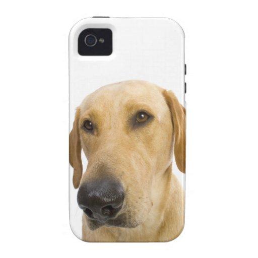 Caso grande del iPhone 4 de Labrador del amarillo  iPhone 4/4S Funda