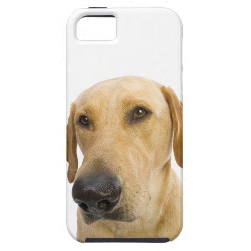 Caso grande del iPhone 5 de Labrador del amarillo  iPhone 5 Case-Mate Carcasa