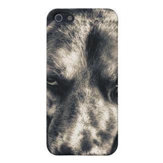 Caso gruñón del iPhone 5 del perro iPhone 5 Cárcasas