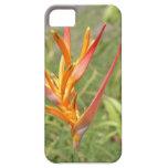Caso hawaiano del iPhone 5 de la flor de Heliconia iPhone 5 Case-Mate Cárcasas