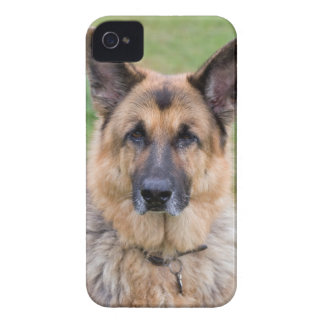 Caso hermoso del iphone 4 de la foto del perro de  Case-Mate iPhone 4 protector