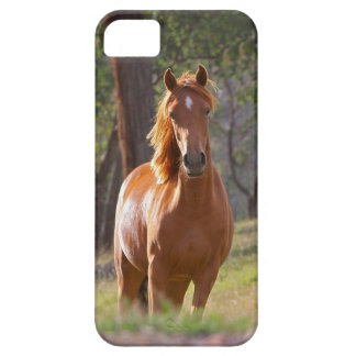 Caso hermoso del iPhone 5 del caballo para los iPhone 5 Case-Mate Protectores