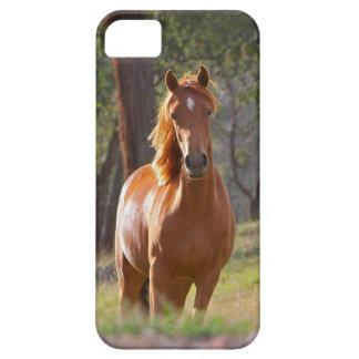 Caso hermoso del iPhone 5 del caballo para los iPhone 5 Carcasas