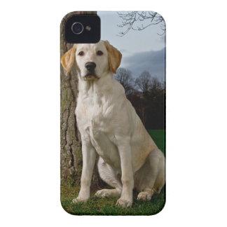 Caso intrépido de Labrador Blackberry iPhone 4 Cárcasa
