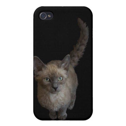 Caso Iphone4: Gato de LaPerm iPhone 4 Fundas