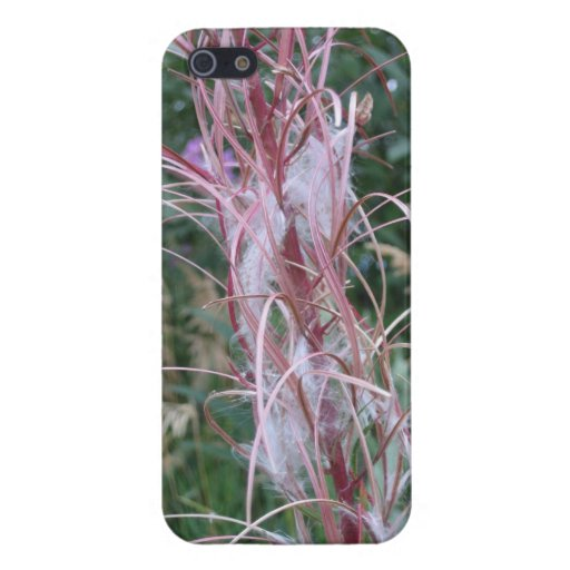 caso iPhone5: Wildflowers Fairbanks Alaska iPhone 5 Coberturas