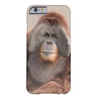 Caso iphone6 del orangután de Sumatran (abelii del Funda Para iPhone 6 Barely There