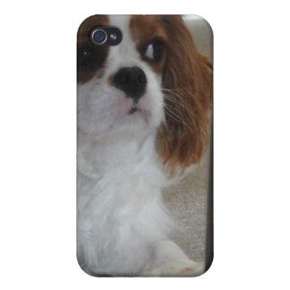 Caso lindo arrogante del iPhone del perro de perri iPhone 4/4S Carcasas