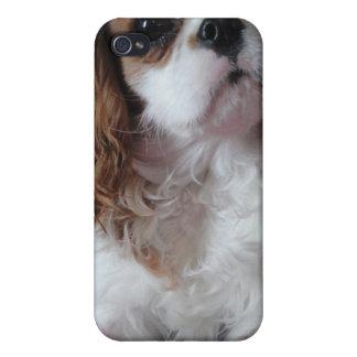 Caso lindo arrogante del iPhone del perro de perri iPhone 4 Funda