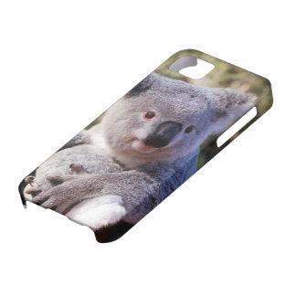Caso lindo de Iphone de la casamata 4 del oso de Funda Para iPhone SE/5/5s