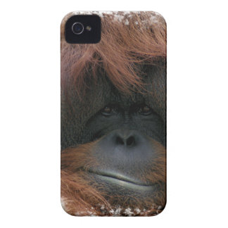 Caso lindo del iPhone 4 de la cara del orangután Funda Para iPhone 4 De Case-Mate