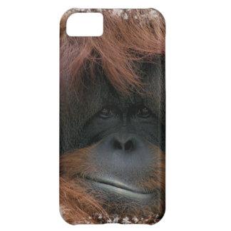Caso lindo del iPhone 5 de la cara del orangután
