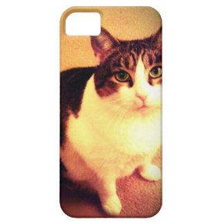 caso lindo del iPhone 5 del gato iPhone 5 Carcasas
