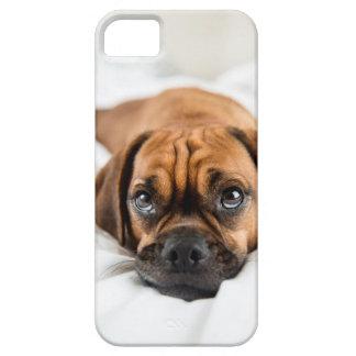 Caso lindo del perro de Puggle Funda Para iPhone 5 Barely There