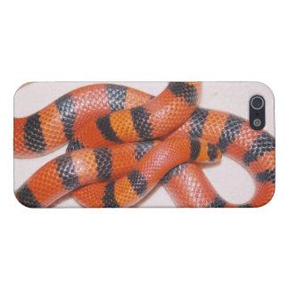 Caso listo del iPhone 5 del caso de la serpiente d iPhone 5 Funda