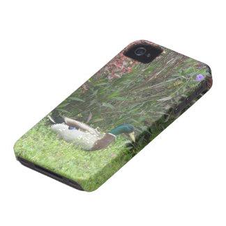 Caso masculino de los patos del pato silvestre carcasa para iPhone 4