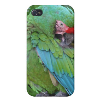 Caso militar Preening del iPhone 4 del Macaw iPhone 4 Carcasa