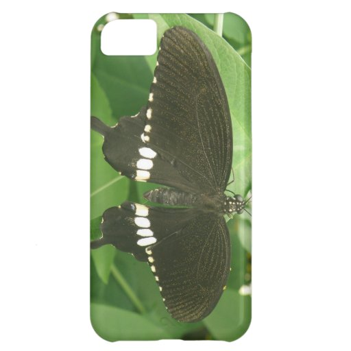 Caso mormón común del iPhone de la mariposa Funda Para iPhone 5C
