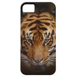 Caso móvil del iPhone del tigre de la bella arte Funda Para iPhone SE/5/5s