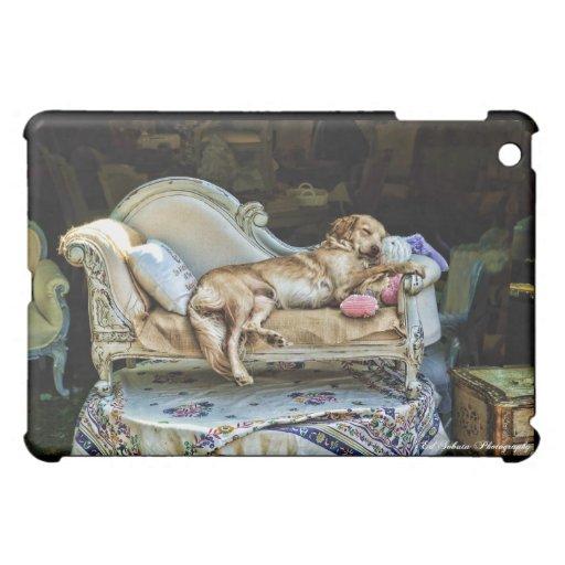 Caso Napping del perro IPAD