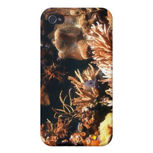 Caso pacífico del iPhone del arrecife de coral iPhone 4 Carcasas