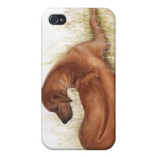 caso pedigrí Rodesian Ridgeback del iPhone del per iPhone 4/4S Carcasa