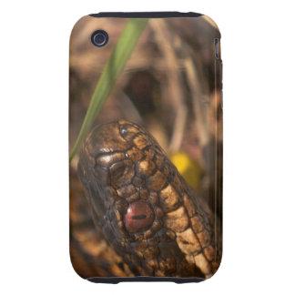 Caso principal de Iphone 3G/3GS de las serpientes Tough iPhone 3 Protectores