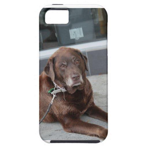 Caso que espera del perro iPhone 5 Case-Mate carcasas
