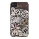 Caso raro del iPhone 4 de la fauna del gato grande iPhone 4 Fundas