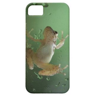 Caso realista estupendo del iPhone de la rana aust iPhone 5 Protectores