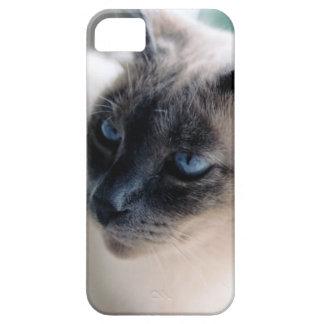 Caso reservado del iPhone 5 de la casamata del gat iPhone 5 Case-Mate Fundas