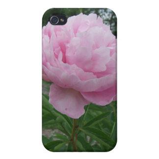 Caso rosado de Iphone 4 de los Peonies del Peony iPhone 4 Protector