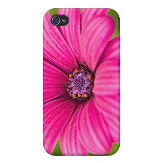 Caso rosado del iPhone 4 de la flor de la margarit iPhone 4 Cobertura